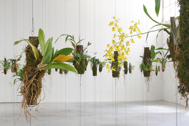 orchids, tree logs, steel wires, HPS-light and humidifier site specific dimensions. Installation view from the solo exhibition ʻA travers bois pour trouver la forêt', Le Palais de Tokyo, Paris